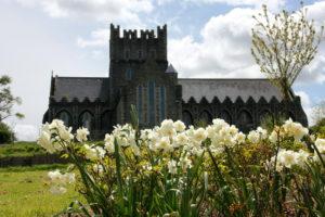 Daffodils at St. Brigid