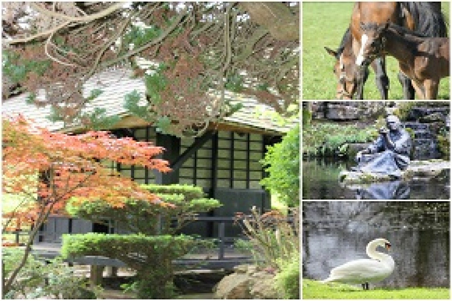 Irish National Stud, Japanese Gardens & St. Fiachras Garden